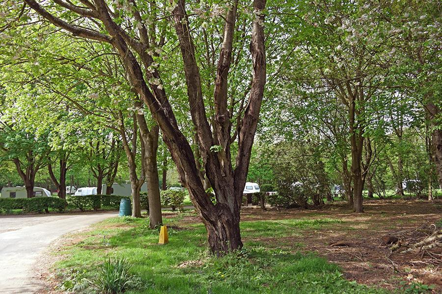 Scragged Oak Caravan Park