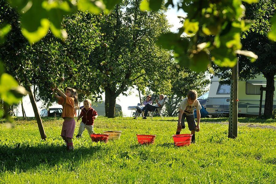 Camping Manser